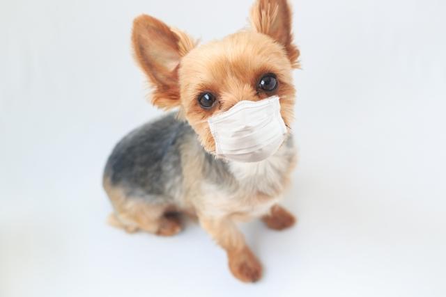 食生活を見直す事で、辛い花粉症が快適に!?
